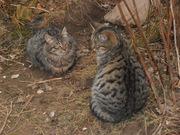Дві кішечки чекають на хороших і чуйних хазяїв
