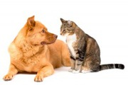 виклик ветеринара додому Івано-Фраківськ,  ветеринарна допомога