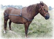 конная упряжь: седла,  уздечки, хомуты,  гужи,  сшивки,  шлеи,  вожжи,  нарыт