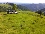 Земля в Карпатах цена 2500$,  с.Гринява Верховинский район