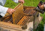 Продам бджоли з вуликом