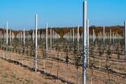 Продам столбики бетонные для садов,  виноградников